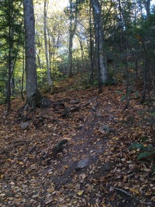 The hike up the mountain: trail to Artist's Bluff